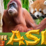 Wildlife Park 3 Asia